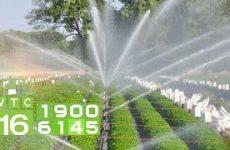Bật mí cách xử lý nước giếng khoan tưới cho cây trồng
