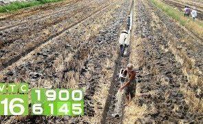 Kinh nghiệm cải tạo đất lúa để trồng cây ăn quả